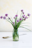 Chive in blossom Royalty Free Stock Photos