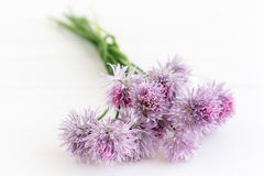 Chive blossoms Royalty Free Stock Photography