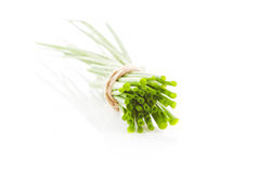 Chive bunch cross section isolated. stock image