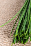 Chive onion on burlap canvas Stock Photos