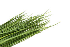 Chive tips Royalty Free Stock Photo