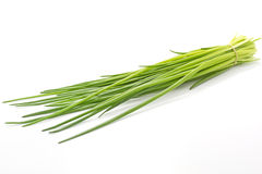 Chive on white background Stock Photos