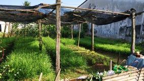 chives стоковые фото