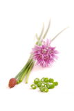 Chives Stock Photography