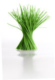 Chives. Isolated bunch of chives spiraling up, reflecting on white glossy surface Stock Image