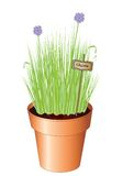 Chives. Illustration of potted chives isolated on white background. Available as vector or jpg Royalty Free Stock Photo