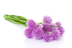 Chives (Allium Schoenoprasum) Royalty Free Stock Image