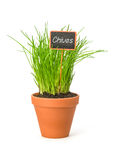 Chives in a clay pot with a label Stock Photo