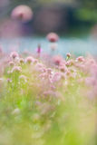 Chives in daytime Royalty Free Stock Images