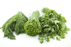 Chives and dill with parsley stock image