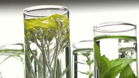 Chives, dill, thyme, basil,  curry and mint in test tubes stock footage