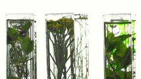Chives, dill, thyme, basil,  curry and mint in test tubes stock video
