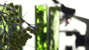 Chives, dill, thyme, basil,  curry and mint in test tubes stock video footage