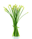 Chives flower or Chinese Chive isolated on white background Stock Photos