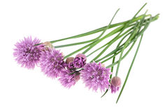 Chives  flower Royalty Free Stock Photos