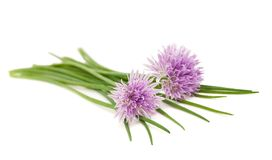 Chives flowers stock photo