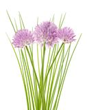 Chives flowers stock photos