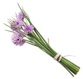 Chives With Flowers Stock Image