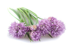 Chives  flowers Royalty Free Stock Image