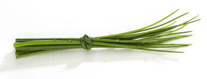 Chives fret. On white background isolated Royalty Free Stock Images