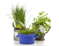 Chives, garden cress and lemon balm Royalty Free Stock Photo