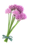 Chives Herb Stock Photos