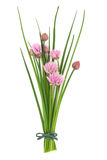 Chives Herb Flower Posy Royalty Free Stock Photo
