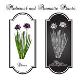 Chives herb. Plant  illustration Royalty Free Stock Photos