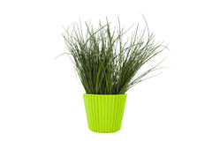Chives, herbs kitchen Royalty Free Stock Photos