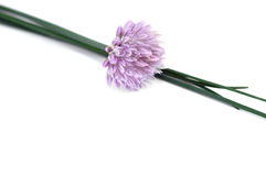 Chives, Isolated on White Royalty Free Stock Photography