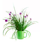 Chives isolated on white. Chives in a cup isolated on white Royalty Free Stock Image