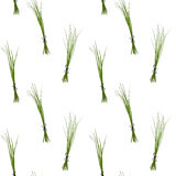 Chives pattern Stock Photo