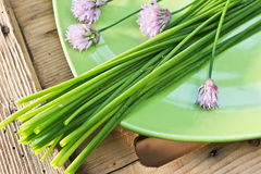 Chives on the plate Stock Images