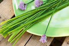 Chives on the plate Royalty Free Stock Photography