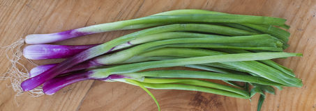 Chives Stock Photos
