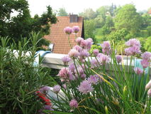 Chives and rosemary on balcony Royalty Free Stock Photo