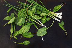 Chives and sorrel leaves scattered on a dark  background. Stock Image