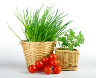 Chives,tomato and oregano in baskets Royalty Free Stock Image