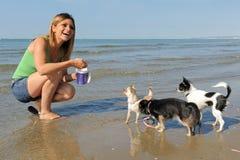 Chiwawas et fille sur la plage Image libre de droits
