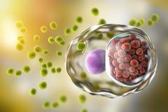 Pathogenesis and Clinical Manifestations of Chlamydia trachomatis