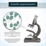 Chlamydomonas κάτω από το μικροσκόπιο εργαστήριο επιστημονικό Ελεύθερη απεικόνιση δικαιώματος