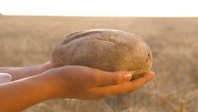 Chleb w rękach dziewczyny nad pszenicznym polem smakowity bochenek chleb na palmach świeży żyto chleb nad Dojrzałymi ucho zbiory