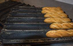 Chlebowi kije ?wiezi od piekarnika obraz royalty free