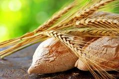 chlebowi kolce Zdjęcie Stock