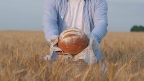 Chlebowy żniwo, mężczyzna ręki przedstawia ciebie i daje piec chleb na białym ręczniku w jesień dorośleć zbożowym jęczmienia polu zbiory