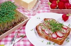 Chlebowy plasterek z rzodkwią i cress Zdjęcia Royalty Free
