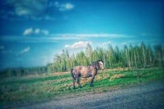 Chlewnia koń na paśniku Zdjęcia Stock