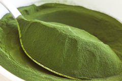 Chlorella algae powder royalty free stock image