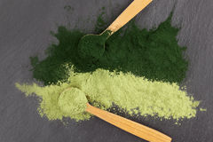 Chlorella and spirulina. Chlorella and barley grass, healthy green superfood powder in wooden spoons from above, black surface Stock Photography