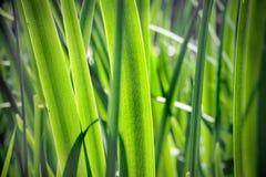 Chlorophyll Stock Image